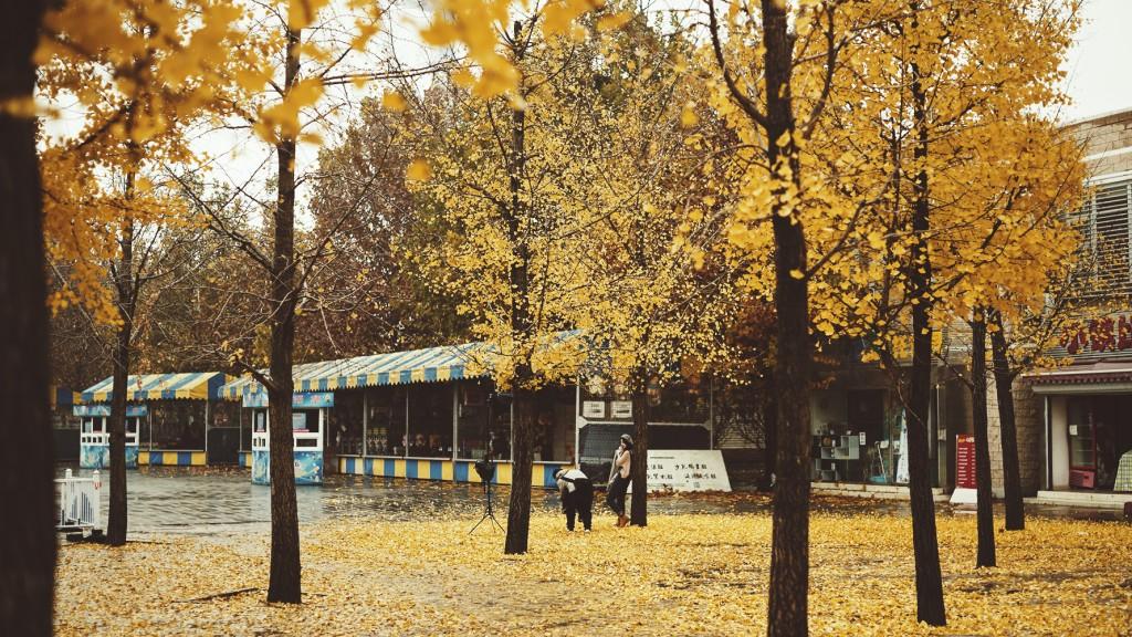 chaoyang park beijing fall